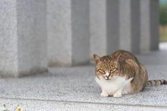 Inländische Katze der getigerten Katze Stockfotos