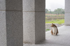 Inländische Katze der getigerten Katze Stockfotografie