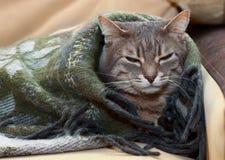 Inländische Katze der getigerten Katze, die in einer Decke schläft Lizenzfreie Stockbilder