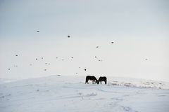 Inländische Pferde Lizenzfreies Stockfoto