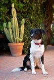 Inländischer Hund, der auf Ziegelsteinpatio sitzt Lizenzfreie Stockfotos