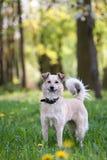 Inländischer Hund, der Natur genießt Stockfotografie