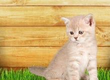 Inländisches cat Lizenzfreies Stockfoto