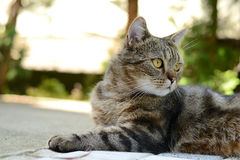 Inländisches cat Lizenzfreie Stockbilder