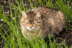 Inländisches cat Stockfotos