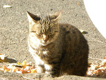 Inländisches cat Lizenzfreie Stockfotografie