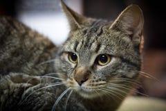 Inländisches cat stockbild