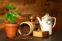 Inländisches Kaffeewachsen Frische Kaffeetassen und Kaffeebohnen herum Schösslinge des Kaffees auf dem Tisch Wachsende Anlagen Stockfoto