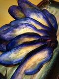 Inlagd aubergine med senap Fotografering för Bildbyråer