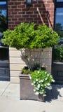 Inlagd utvändig tegelstenskyltfönster för buskar och för blommor Arkivfoton