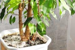 Inlagd växt i huset arkivbild
