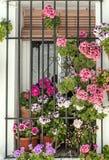 Inlagda blommor i ett fönster Royaltyfri Foto