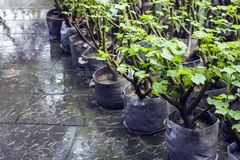Inlagda gröna växter som väntar för att planteras royaltyfria bilder