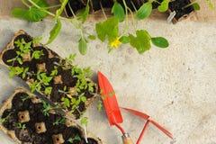 Inlagda plantor som tillbaka växer i biologiskt nedbrytbar krukor på betong Royaltyfri Foto