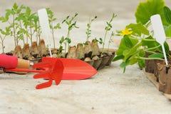 Inlagda plantor som tillbaka växer i biologiskt nedbrytbar krukor på betong Fotografering för Bildbyråer