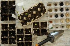 Inlagda plantor som växer i biologiskt nedbrytbar krukor på träbackgro Arkivfoto