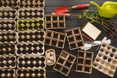 Inlagda plantor som växer i biologiskt nedbrytbar krukor på träbackgro Arkivbilder