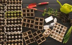 Inlagda plantor som växer i biologiskt nedbrytbar krukor på träbackgro Fotografering för Bildbyråer