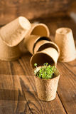 Inlagda plantor som växer i biologiskt nedbrytbar torvmossa Fotografering för Bildbyråer
