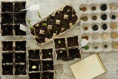 Inlagda plantor som växer i biologiskt nedbrytbar torvmossa, lägger in på trä Arkivfoto