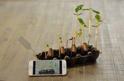 Inlagda plantor som växer i biologiskt nedbrytbar torvmossa, lägger in på trä Royaltyfria Foton