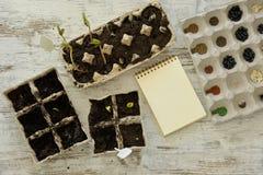 Inlagda plantor som växer i biologiskt nedbrytbar torvmossa, lägger in på trä Fotografering för Bildbyråer