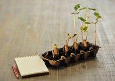 Inlagda plantor som växer i biologiskt nedbrytbar torvmossa, lägger in på trä Arkivbild