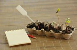 Inlagda plantor som växer i biologiskt nedbrytbar torvmossa, lägger in på trä Royaltyfri Bild