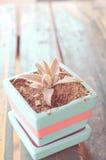 Inlagda plantor som växer i biologiskt nedbrytbar torvmossa, lägger in på trä Arkivfoton
