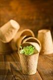 Inlagda plantor som växer i biologiskt nedbrytbar torvmossa, lägger in på träbakgrund Fotografering för Bildbyråer