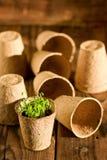Inlagda plantor som växer i biologiskt nedbrytbar torvmossa, lägger in på träbakgrund Royaltyfria Bilder