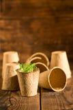 Inlagda plantor som växer i biologiskt nedbrytbar torvmossa, lägger in på träbakgrund Royaltyfri Foto