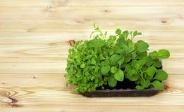 Inlagda plantor som växer i biologiskt nedbrytbar torvmossa, lägger in på träbakgrund med kopieringsutrymme Royaltyfria Foton