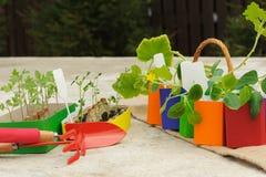 Inlagda plantor som växer i colourfully, lägger in på konkret backgro Arkivbild