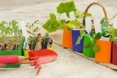 Inlagda plantor som växer i colourfully, lägger in på konkret backgro Royaltyfri Bild
