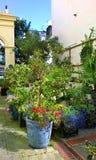 Inlagda växter i trädgård Royaltyfria Foton