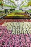 Inlagda växter i växthusbarnkammare royaltyfria foton