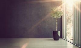 Inlagt träd vid det stora fönstret med ljust solljus royaltyfri fotografi