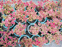 Inlagt växa för plantor Arkivbilder