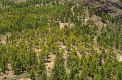 Inland Central Gran Canaria, view south from Roque Nublo Royalty Free Stock Images