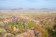 Inland Fuerteventura; Stock Images