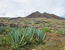 Inland Fuerteventura, Malpais de la Arena Stock Photo