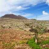 Inland Fuerteventura, Malpais de la Arena Stock Photography