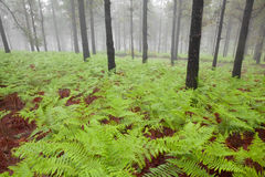 Inland Gran Canaria, foggy day Stock Photography