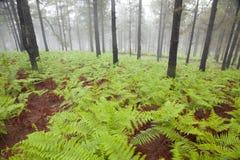 Inland Gran Canaria, foggy day Stock Photo