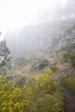 Inland Gran Canaria, foggy day Royalty Free Stock Photo