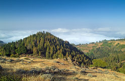 Inland Gran Canaria, view over the tree tops towards cloud cover Stock Photography