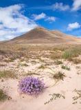 Inland Northern Fuerteventura royalty free stock photo