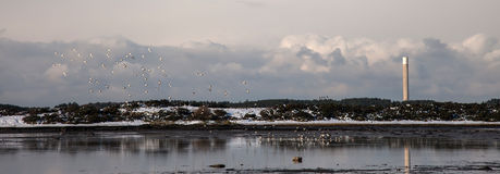Inland Sea Birds Royalty Free Stock Photos