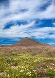 Inlands- Fuerteventura Royaltyfria Foton